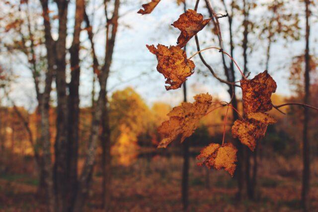 En hjälp att se det goda och känna tacksamhet