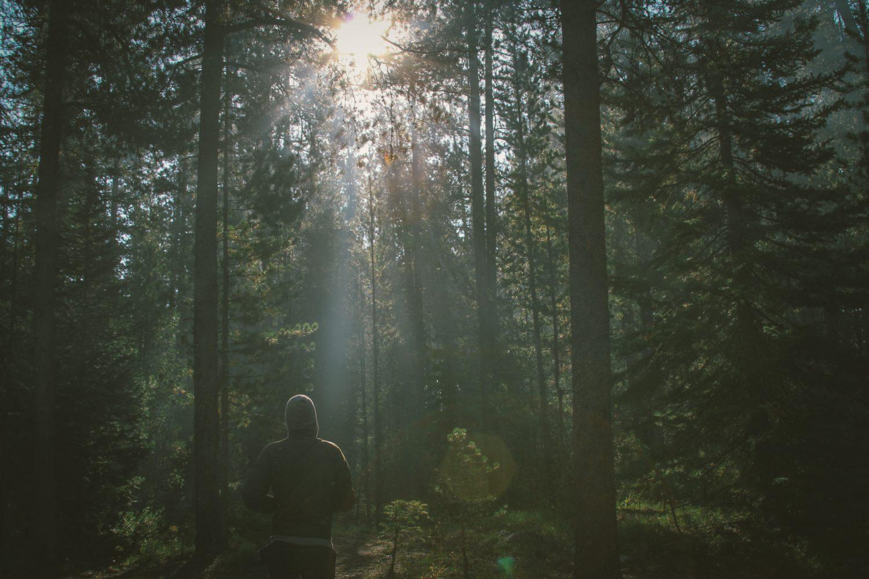 Skog med man som springer