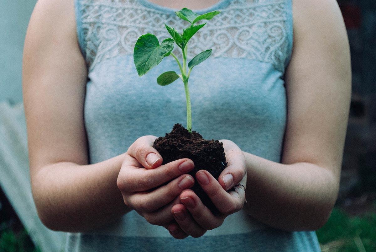 Händer som håller en grön planta