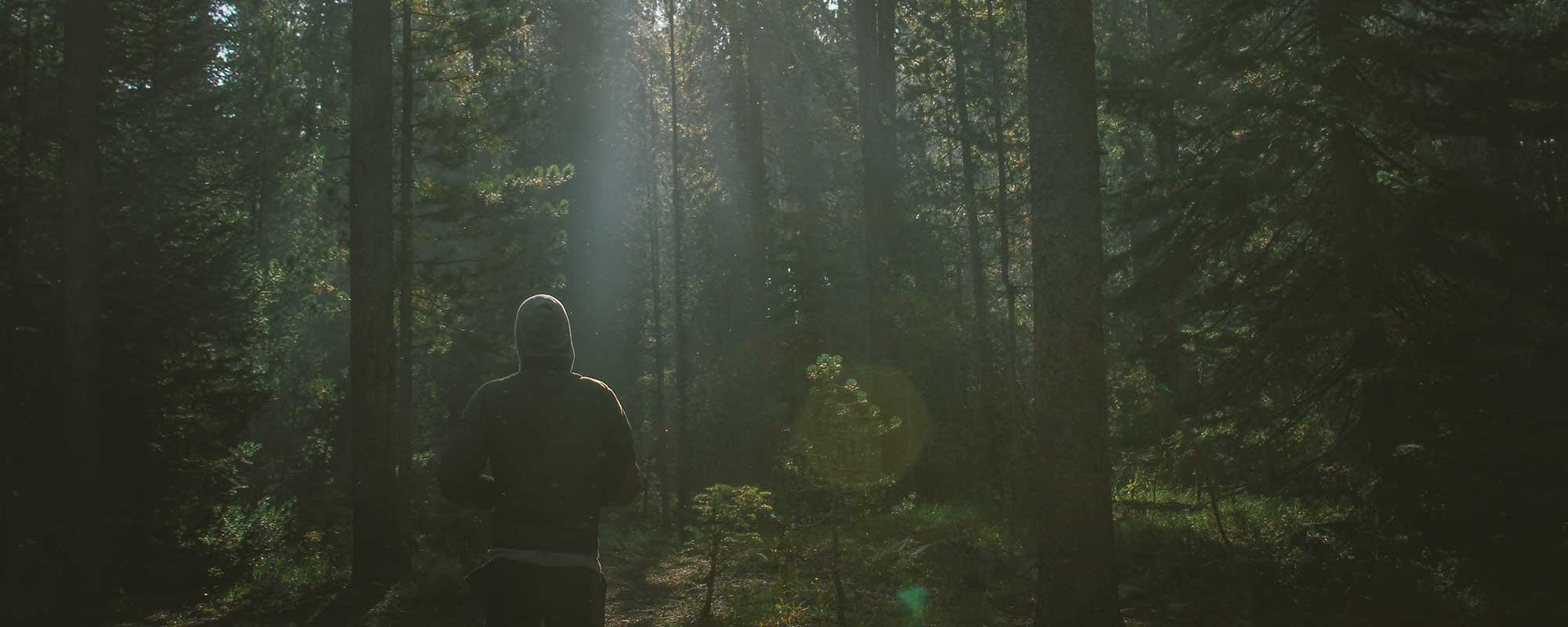 Bakgrund - person som joggar i en skog