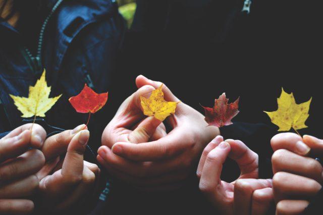 Händer håller i höstlöv