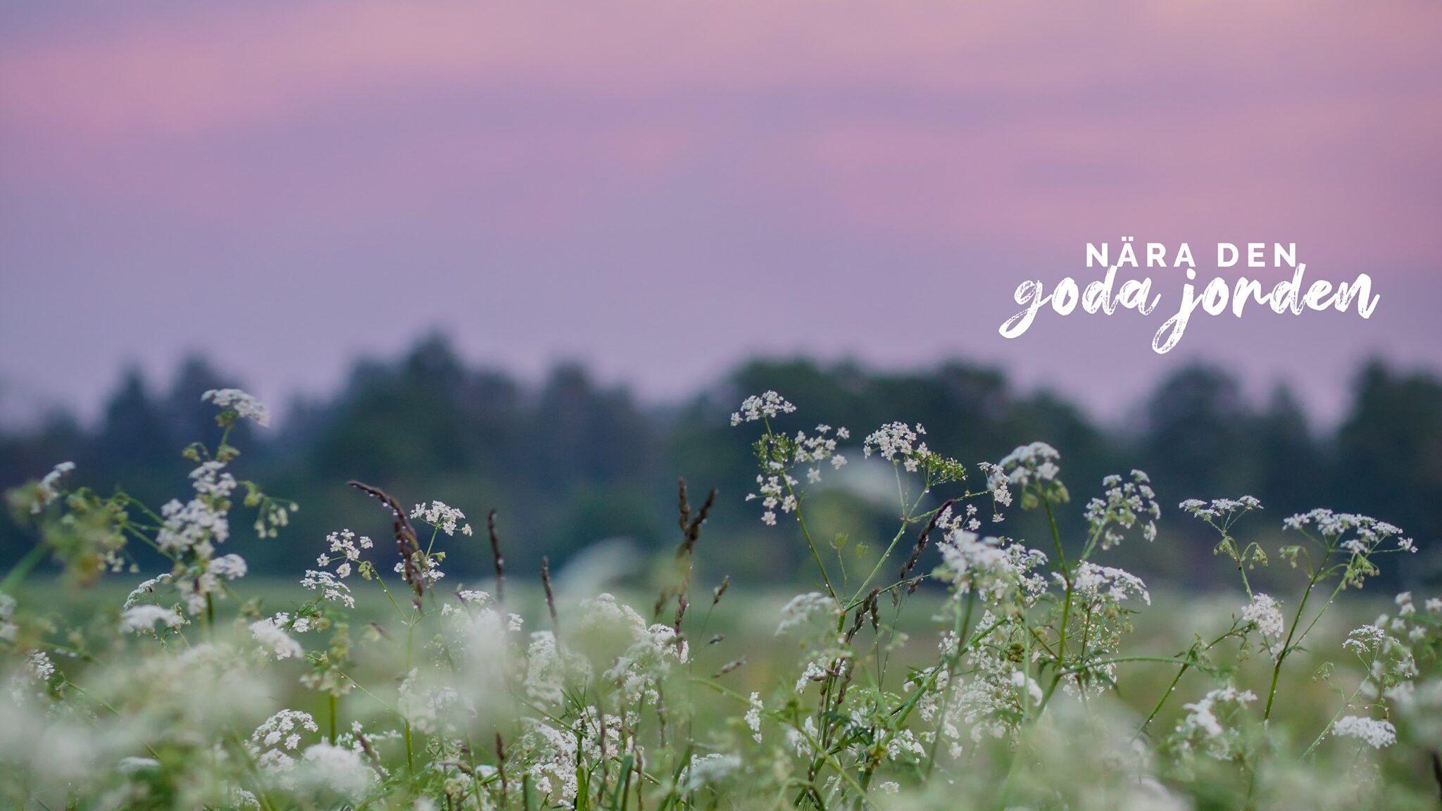 blomsteräng i solnedgång - den goda jorden
