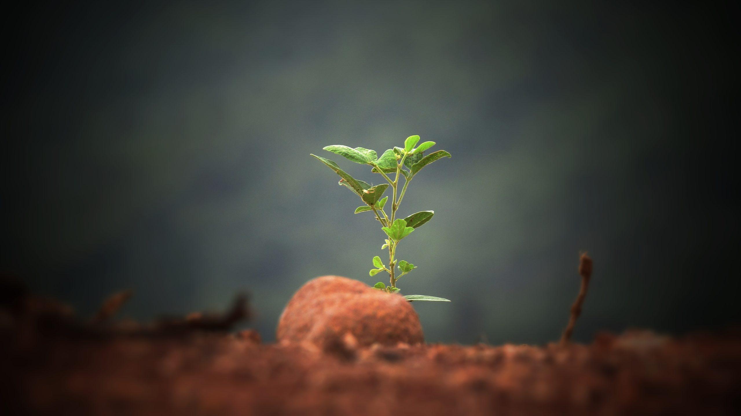 Närbild på planta i jorden