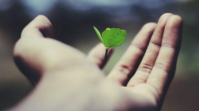 Planta i en öppen hand