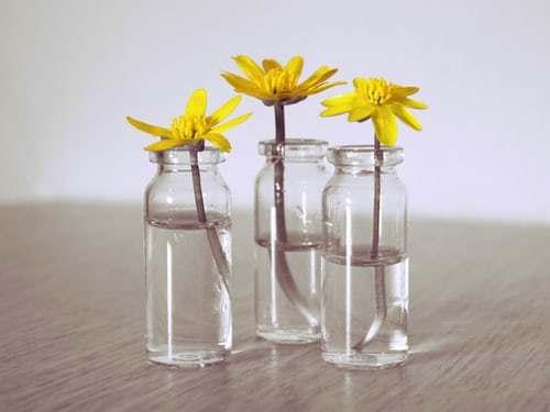 Gula blommor i vaser