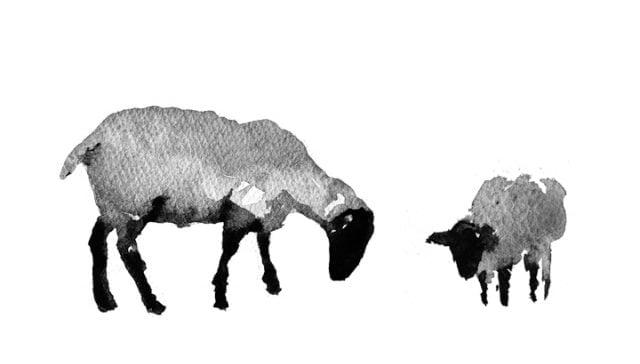 Får med lamm