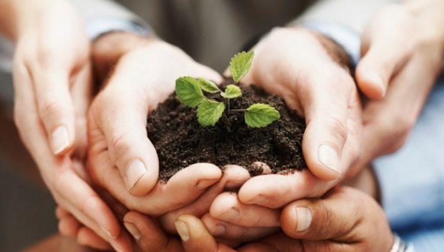 Händer med planta