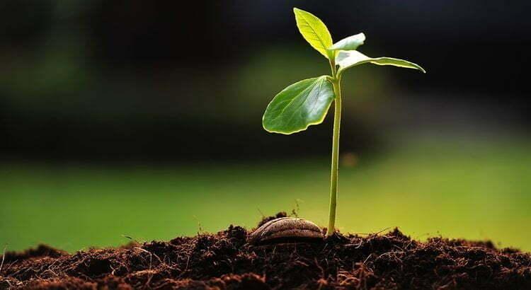 Liten planta i jorden