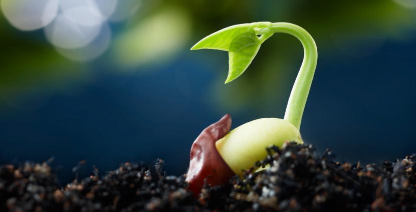 Plantskott