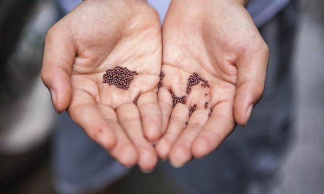 Händer med frön