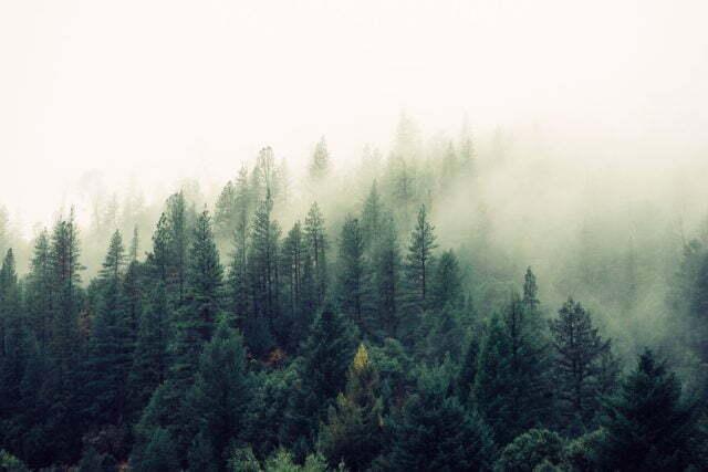 Skog i dimma