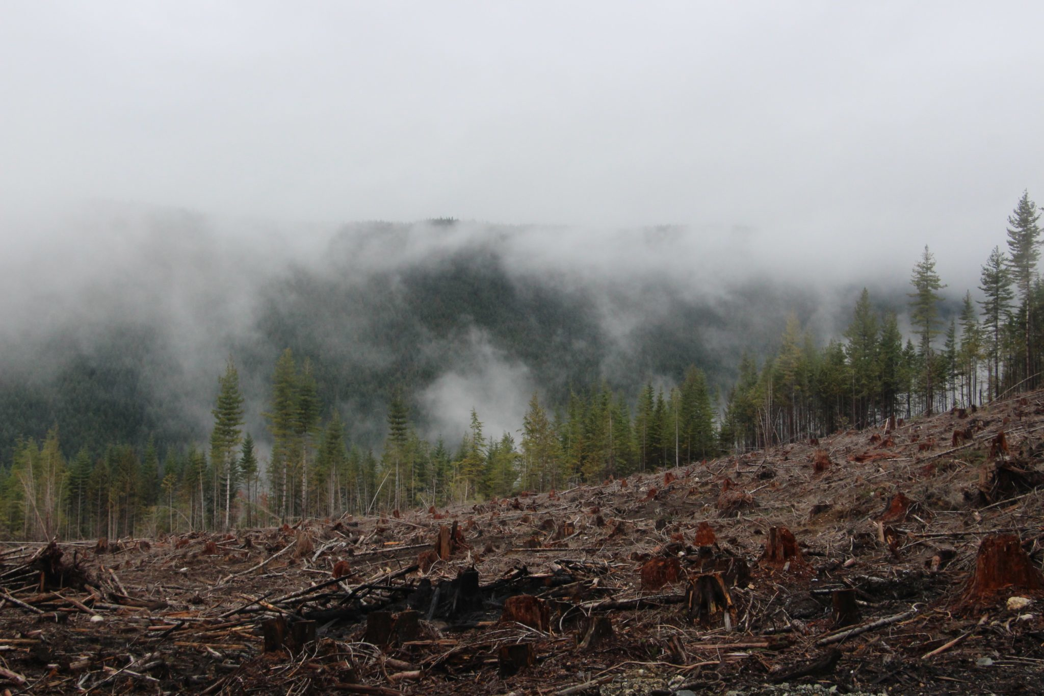 Utsikt över skog och kalhygge