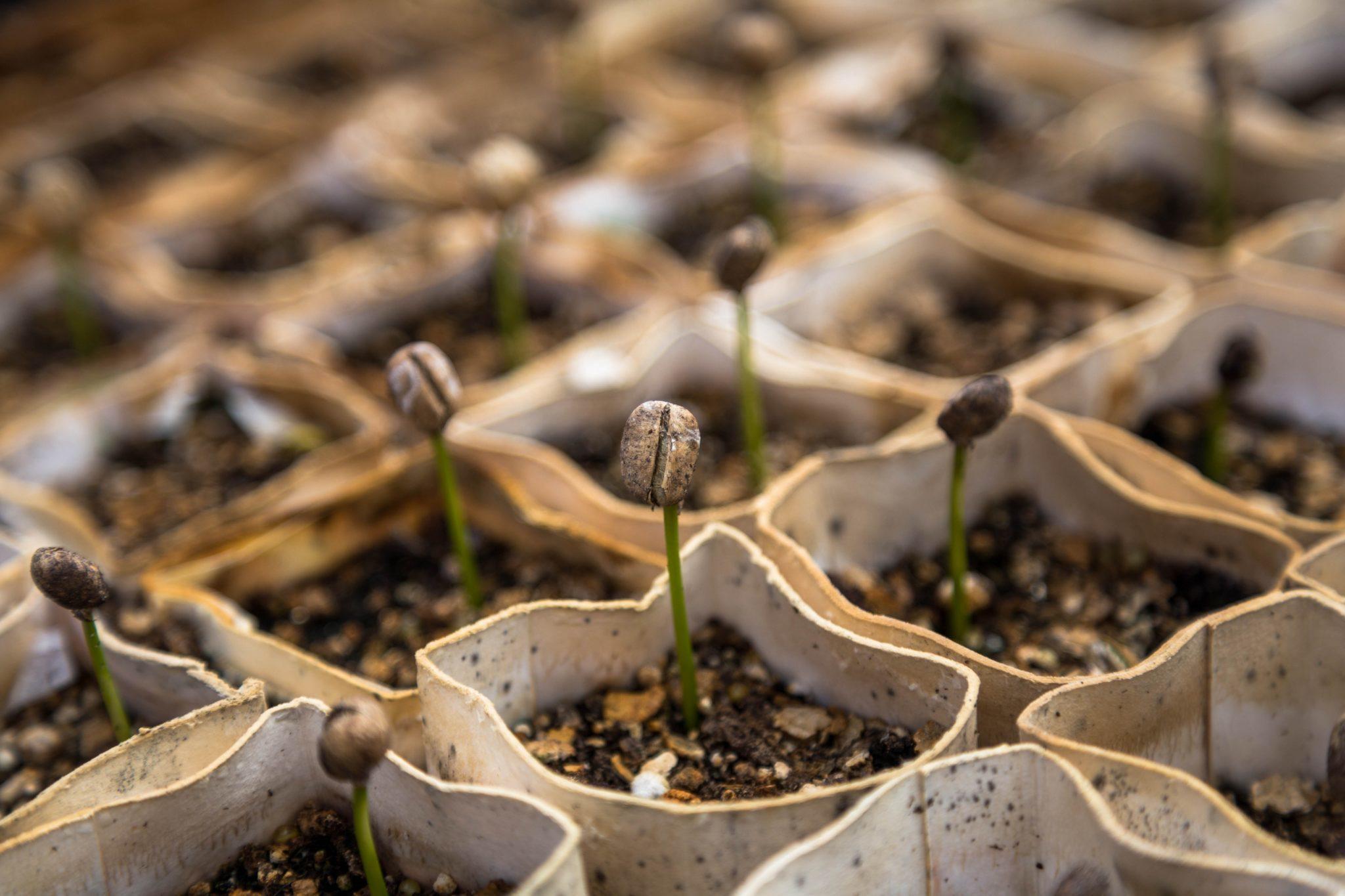 Blomskott som växer