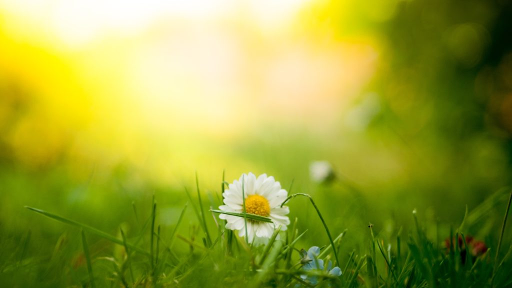 Vit blomma i motljus