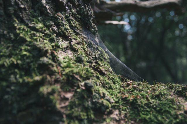 Styrelseutbildning steg 2 – Vårgårda