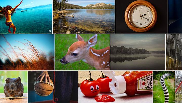 Collage med bilder från bildbanker