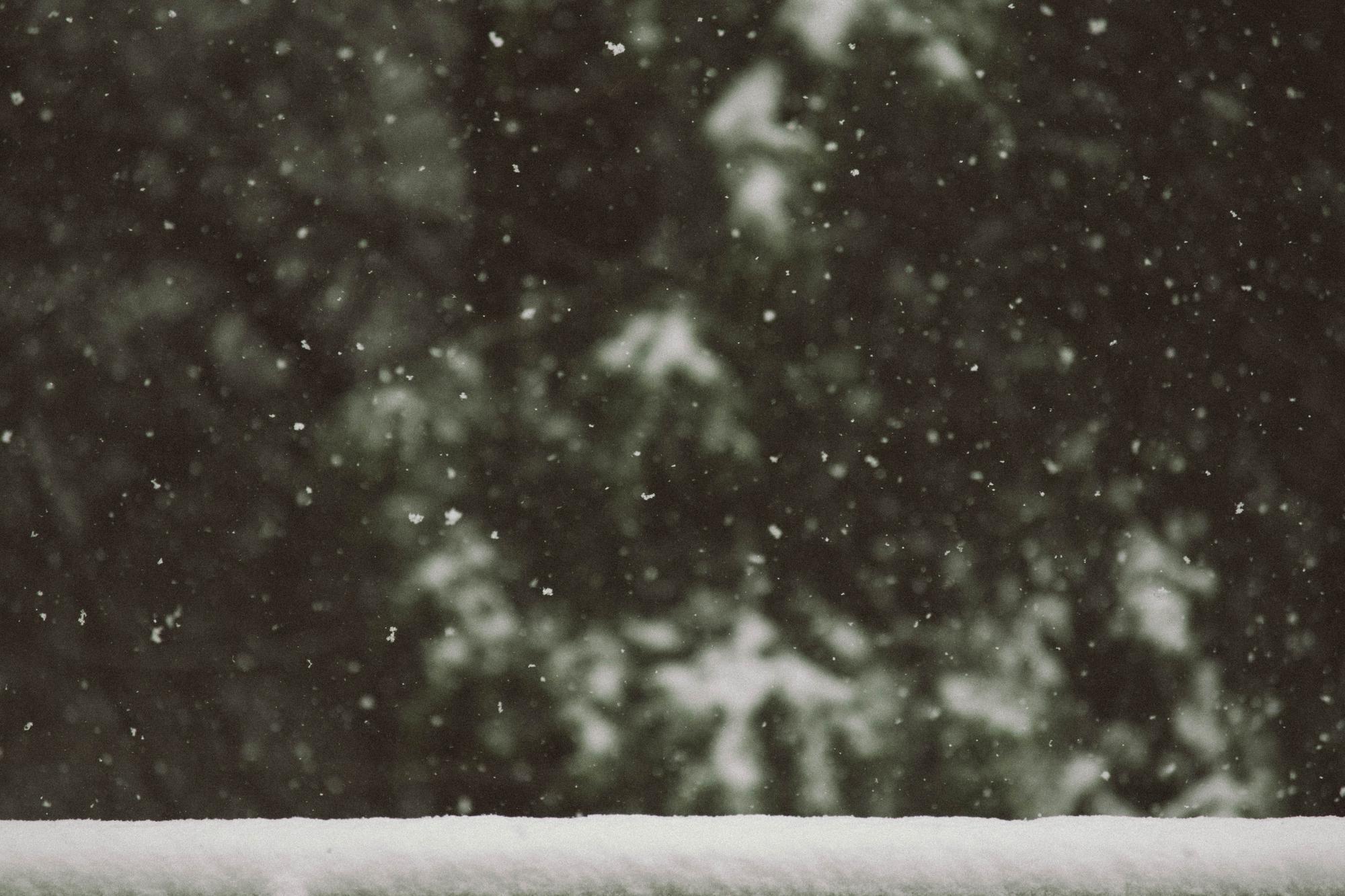 Snö och granar