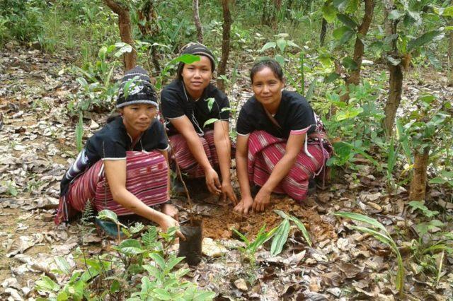 Planteringav skog i Thailand