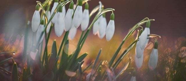 Medarbetardygn 24-25 mars 2020 – INSTÄLLT!! Mer information kommer via mail till alla anmälda.