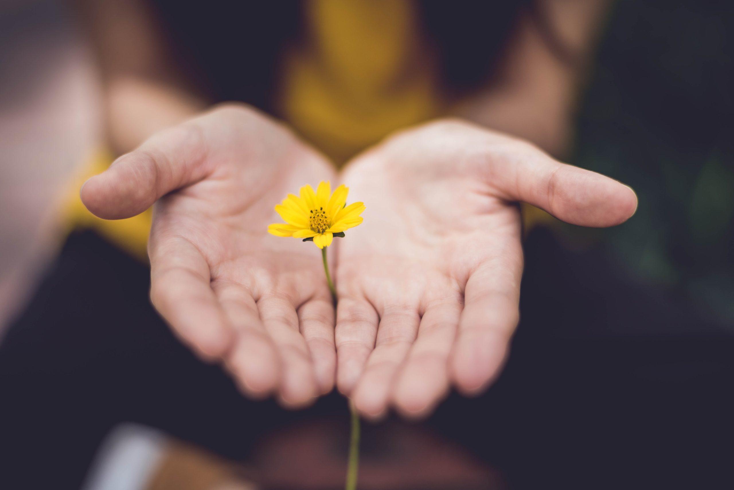 Händer som håller en blomma.
