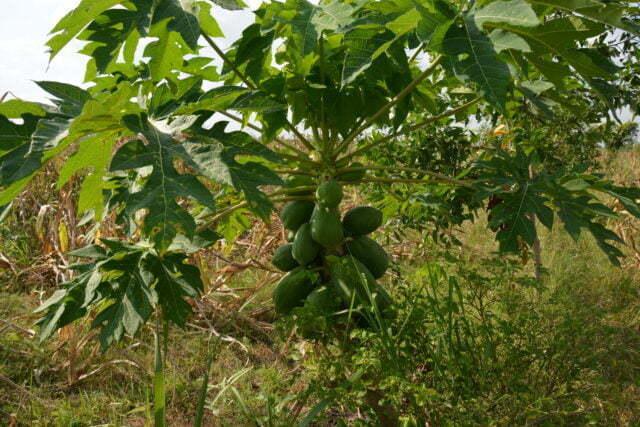 Jord- och skogsbruk i miljöprojekt