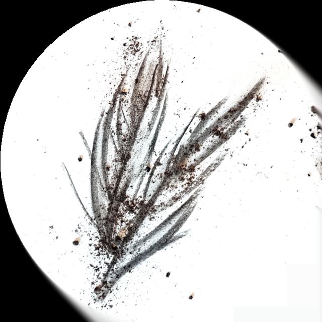 fastan-palmblad