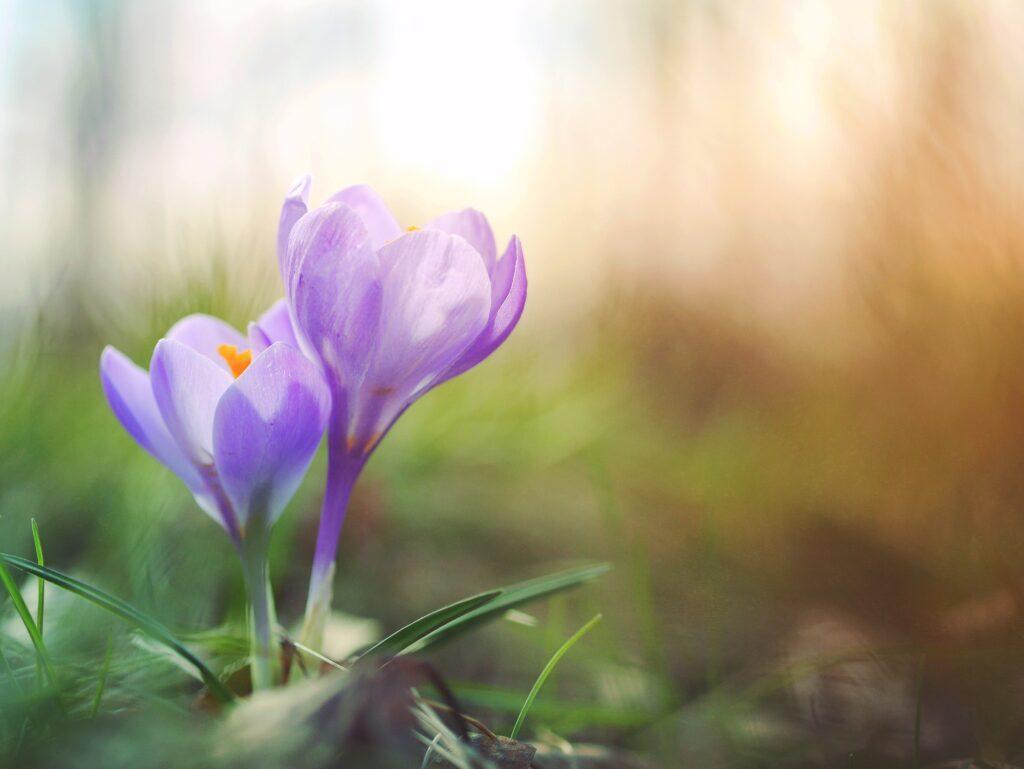 blomma- vår