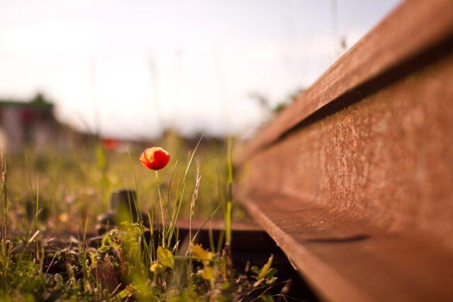 Blomma vid järnväg