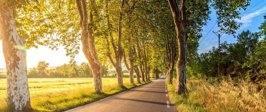 En väg i solljus på landsbygden