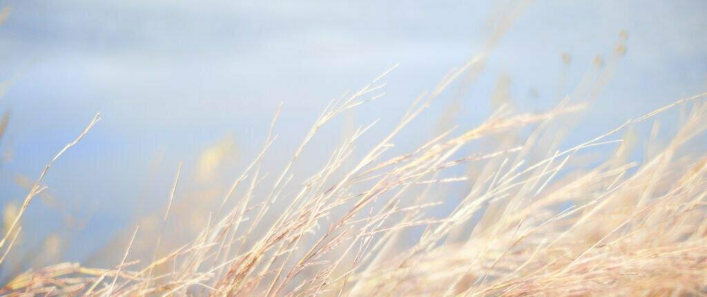 Gräs som rör sig i vinden