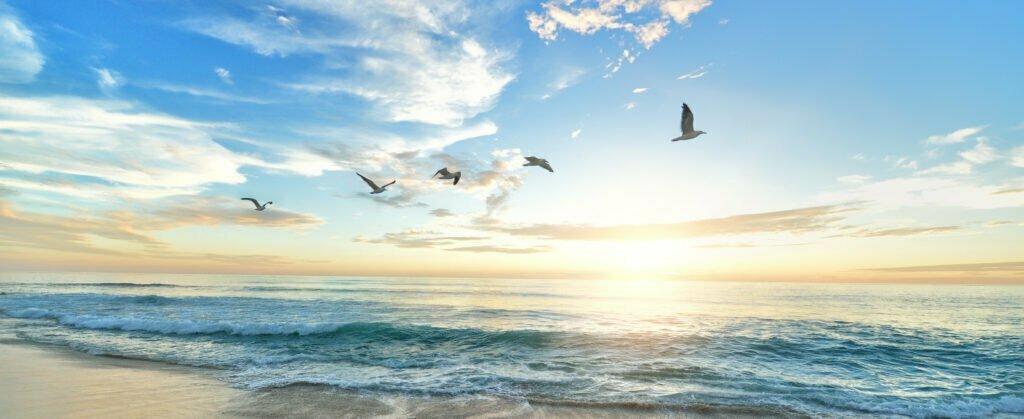 Fåglar som flyger i solnedgång vid havet