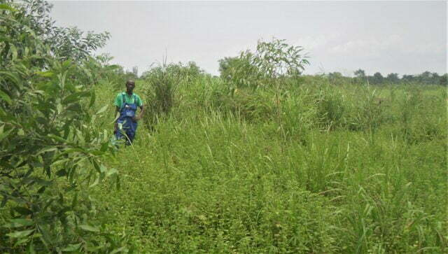 Skapelsetid – Skogsbruksprojekt i Kongo-Brazzaville