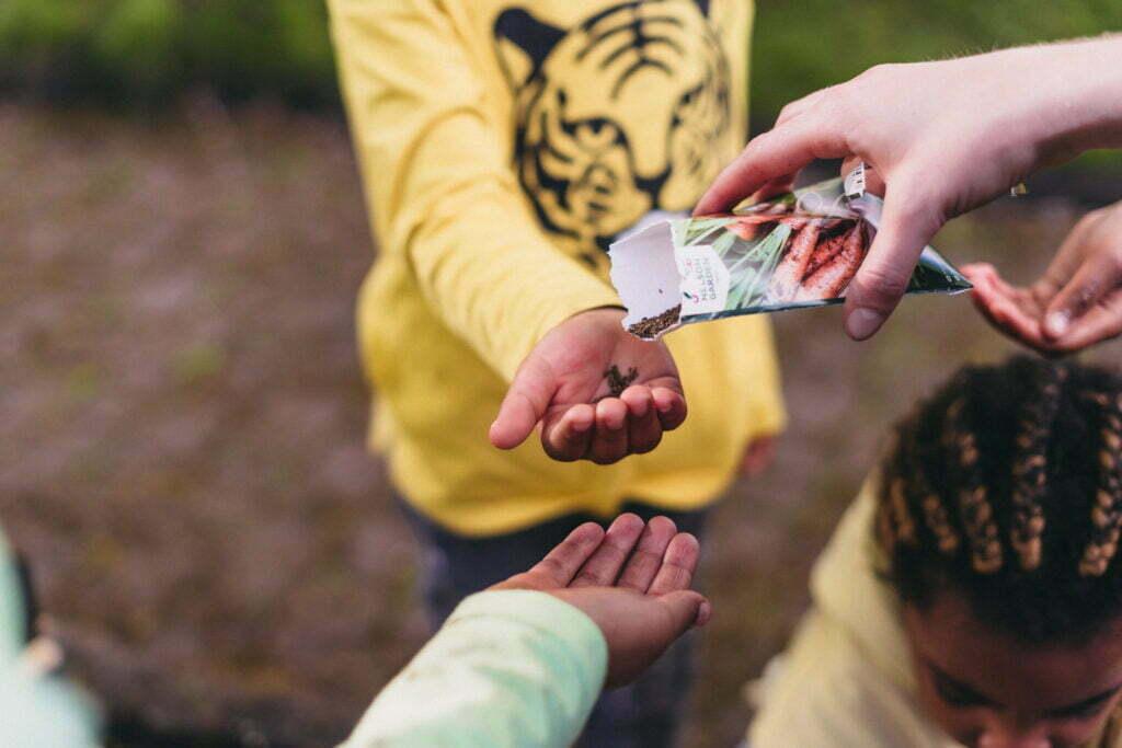 Häller frön i ett barns hand från en fröpåse.